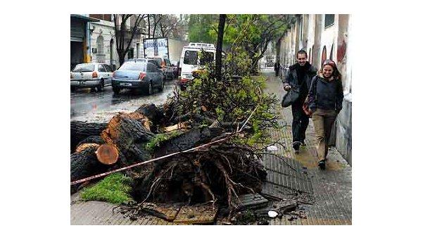 Rige prohibición de poda de árboles en Berazategui