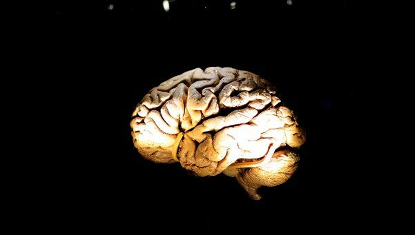 Alzheimer: detener la inflamación cerebral podría frenar el avance