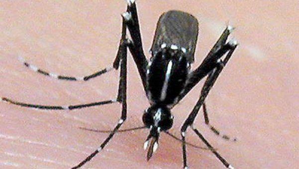 Turista argentino internado en Uruguay por posible caso de zika