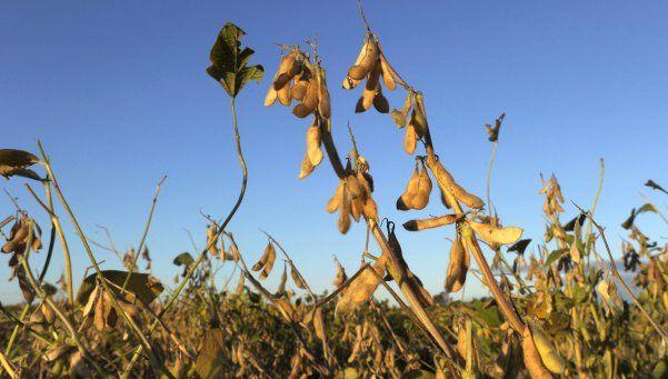 El Gobierno da impulso a la importación de soja