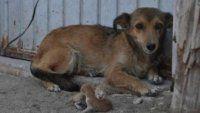 Insólito: mujer asegura que su perra parió dos gatos