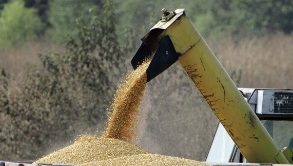 Cerealeras liquidaron casi la mitad de lo previsto por el Gobierno
