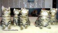 Tiernos gatitos le ponen ritmo a la Navidad