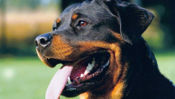Polémica por proyecto para seguro en perros peligrosos