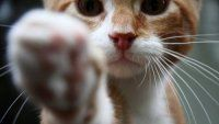 10 proteccionistas de animales que necesitan de tu ayuda