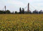Macri quitó las restricciones a la venta de campos a extranjeros