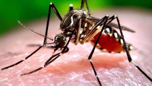 Confirmaron el primer caso de chikungunya en Entre Ríos