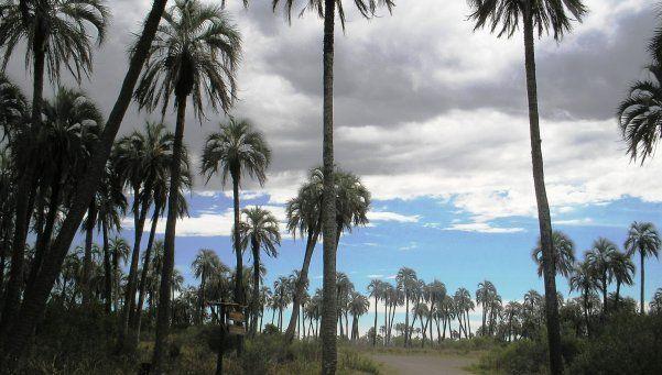 El Palmar, donde las palmeras tienen su propio santuario