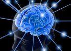 Preguntas y respuestas sobre la neuroplasticidad