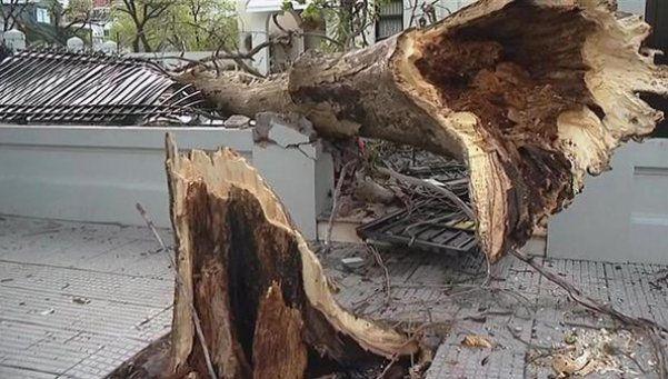 Por el temporal, cayó un árbol sobre una casa y destrozó el portón