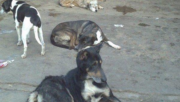 En Zoonosis de Almirante Brown los perros dejaron de ser sus mejores amigos