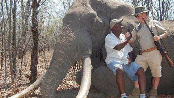 Un turista alemán mató al elefante más importante de Zimbabue