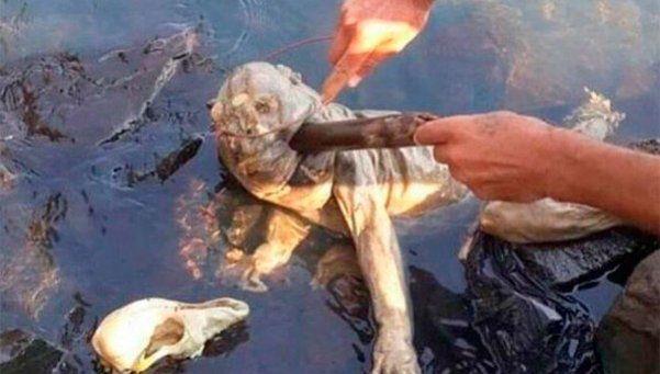 Apareció una extraña criatura a orillas de un río en Paraguay
