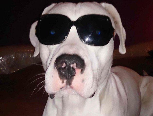 Rocco, un hijo perruno