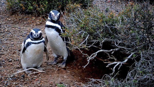 Punta Tombo: un lugar especial para los pingüinos