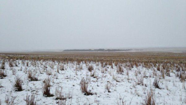 Desafío: ¿podés ver las 550 ovejas?