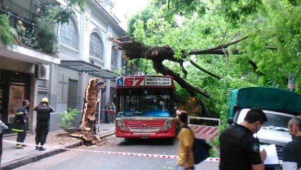 Un árbol cayó sobre un colectivo con pasajeros