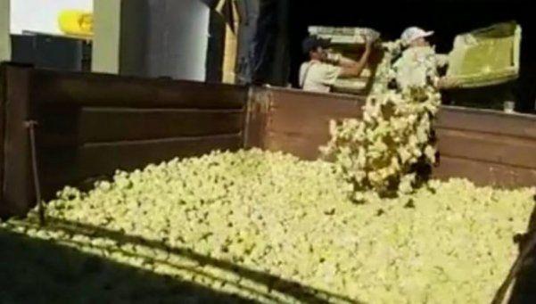 Cresta Roja: sacrifican millones de pollitos y cortan la 9 de Julio