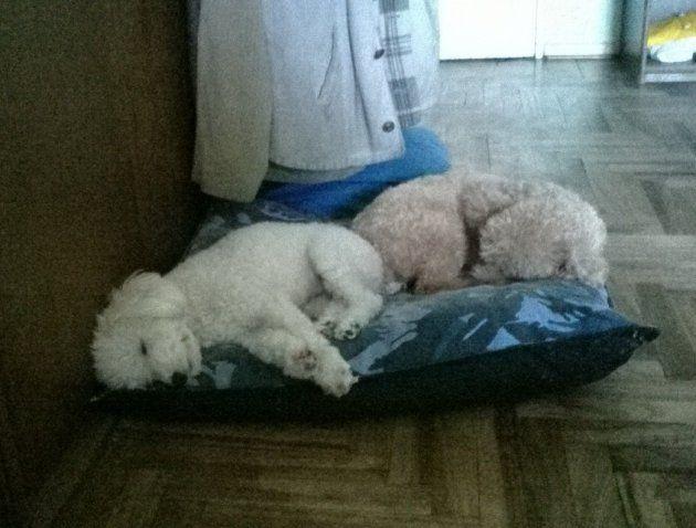 Un par de dormilones