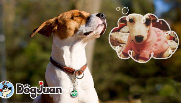 Una novedosa aplicación para conseguirle novia al perro