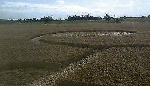 Sorpresa por extrañas huellas en campo de trigo en Santa Fe