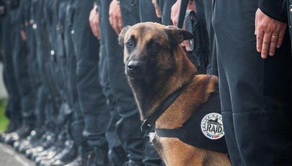 Diesel, el perro héroe que llora el mundo