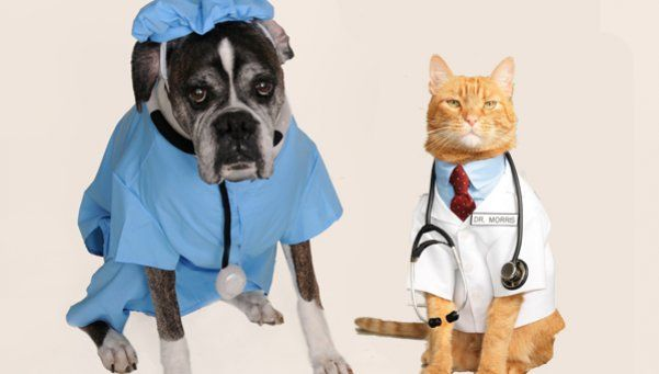 Tener mascotas alarga la vida de sus dueños