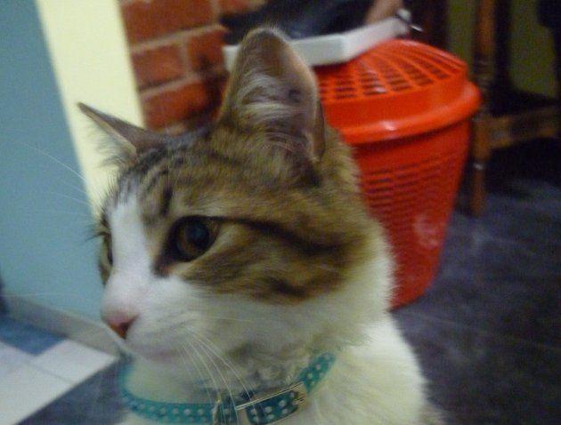 Mini se instaló en la casa
