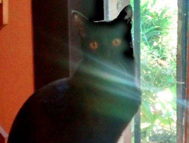 Salem, el gato de la suerte