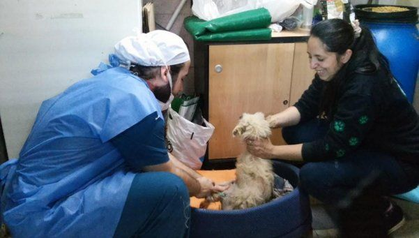 Peña popular para apoyar el cuidado de las mascotas