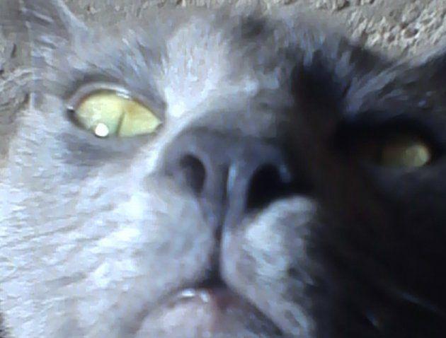 Sorprendido por la cámara