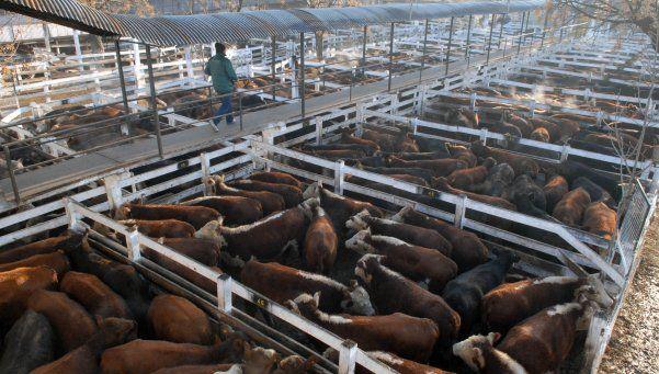 Otra postergación para traslado del Mercado de Hacienda a San Vicente