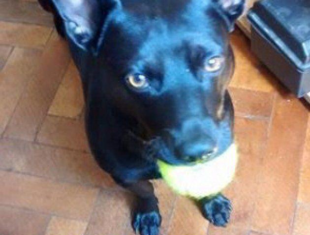 Negrito, un perro agradecido