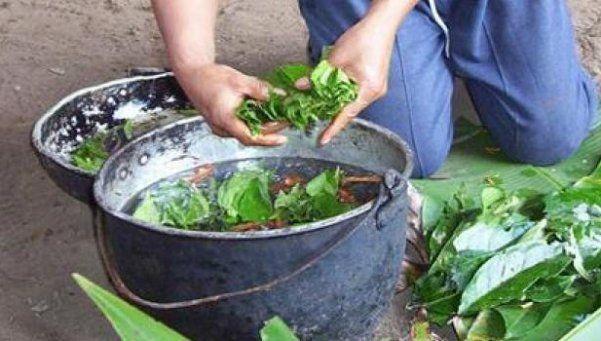 Canadiense mata a inglés tras beber ayahuasca en Perú