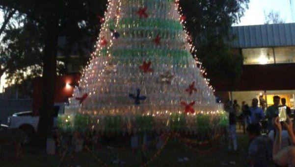 Arbol navideño ecológico adorna la delegación de Santa Catalina