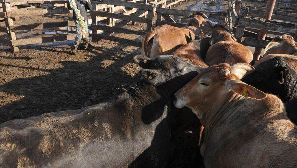 Importarán carne si ganado local no se vende en el país