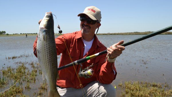 Claves para no fallar en la pesca de las esquivas lisas