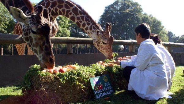 Adiós a un clásico: el Gobierno de la Ciudad cerraría el Zoo