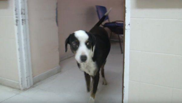 Murió Pirata el perro que esperaba a su dueño fallecido en un hospital