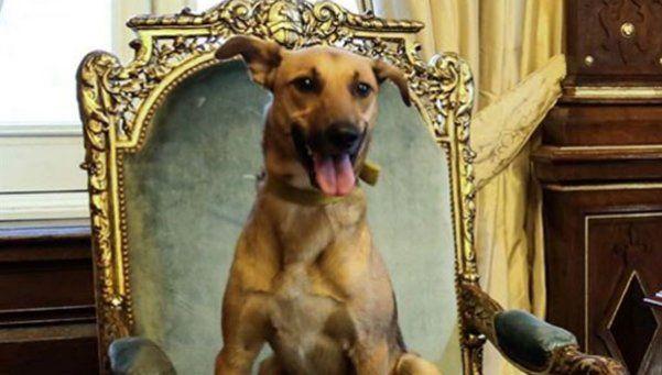 Macri subió al perro del PRO al sillón de Rivadavia
