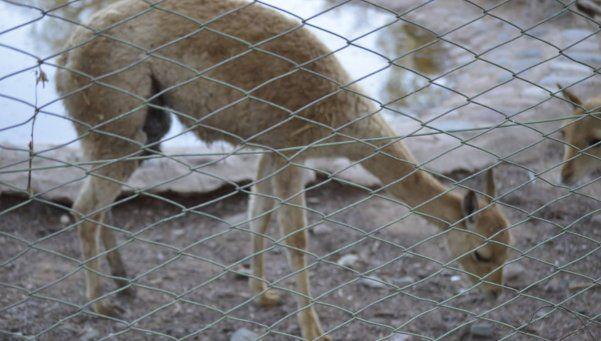 El triste abandono del zoo de Mendoza