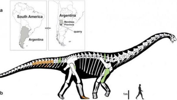 Hallan en Mendoza los restos del dinosaurio más grande del mundo