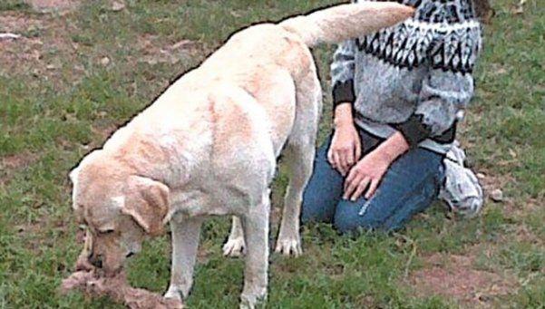 Mendoza: investigan a dos policías por la muerte de un perro