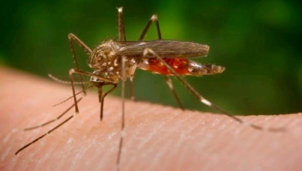 Vacuna contra el zika: laboratorio asegura estar cerca de tenerla