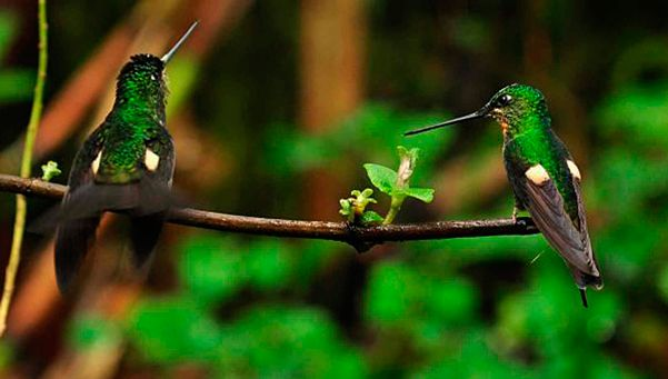 Los colibríes pueden ser una visita muy agradable