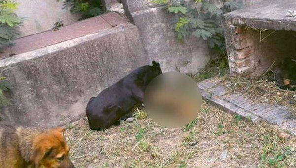 Denuncian que en un cementerio los perros se comen los cadáveres
