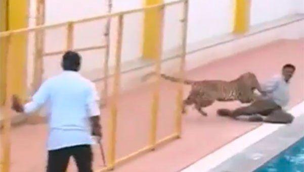 Un leopardo entró a una escuela de la India e hirió a seis personas