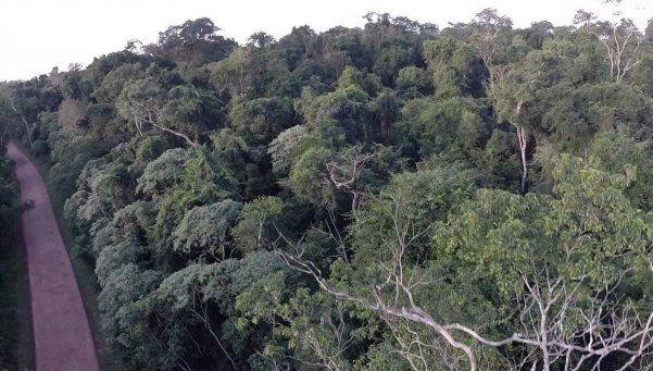 Selva Iryapu: un lugar que cautiva al turista