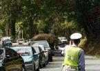 Insólito: por desplante amoroso, elefante rompió 15 autos en China