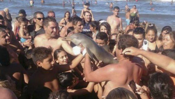 El video inédito del delfín que murió en Santa Teresita